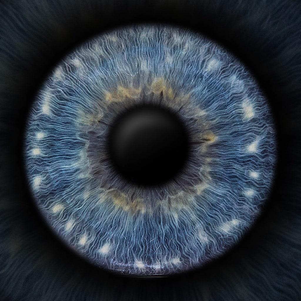 iris foto blau