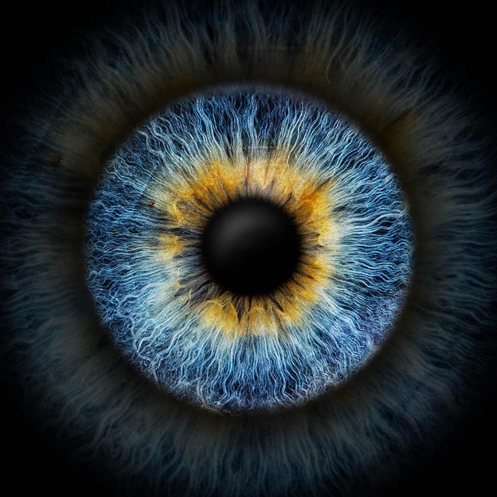 Iris-Fotografie blau