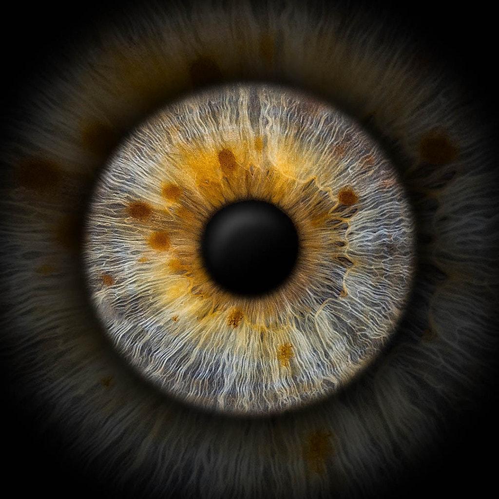 Iris-Einzelfoto