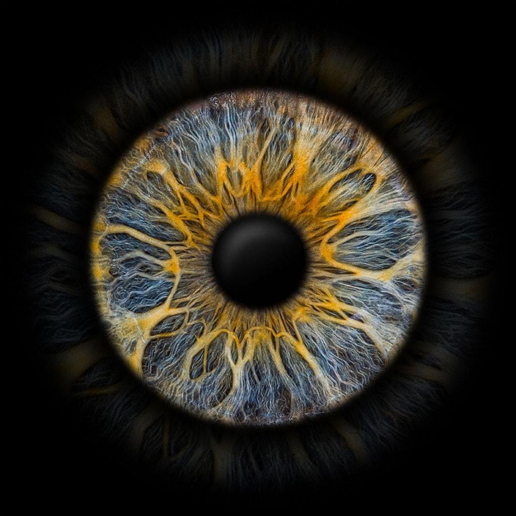Iris-Foto blau gelb