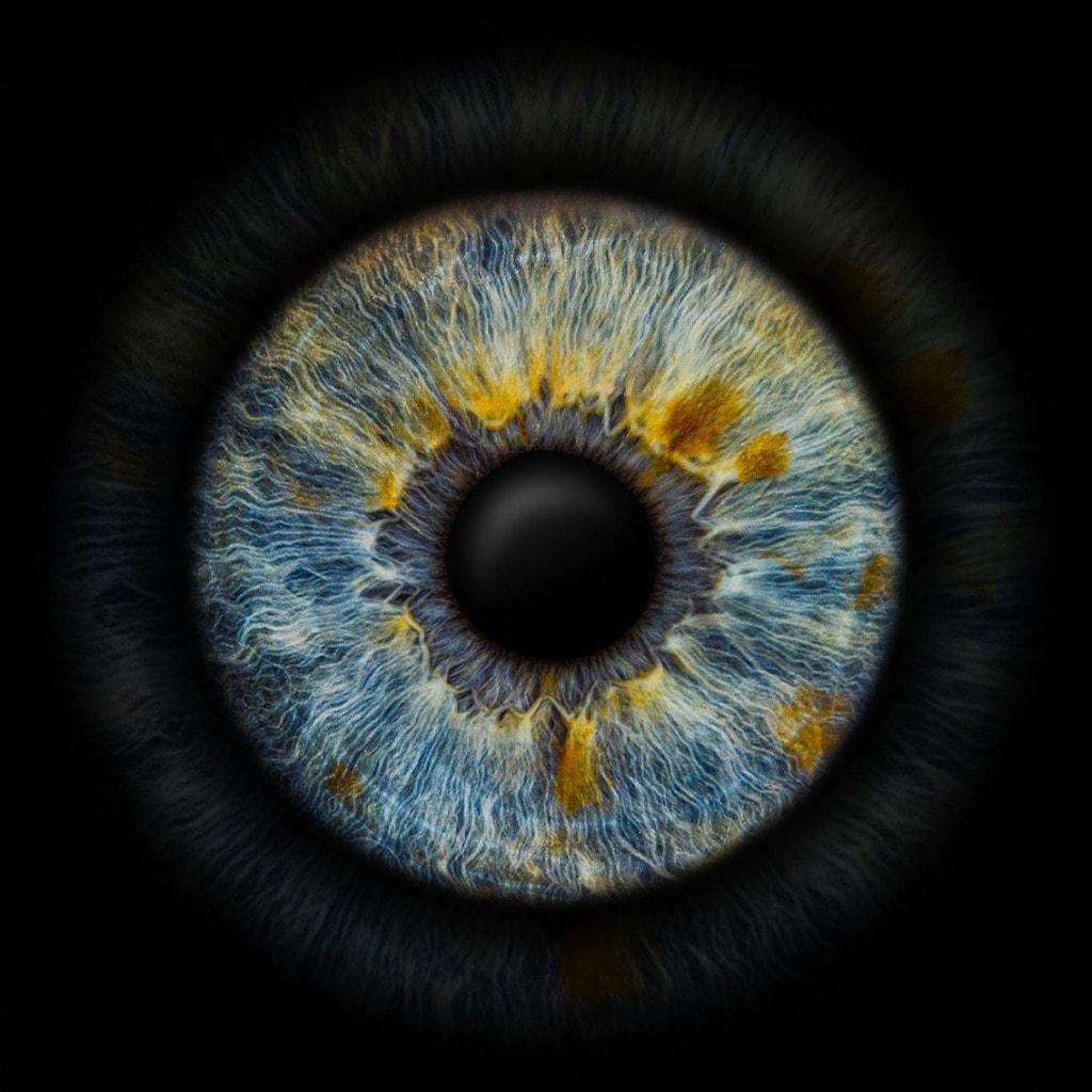 iris foto blau mit flecken